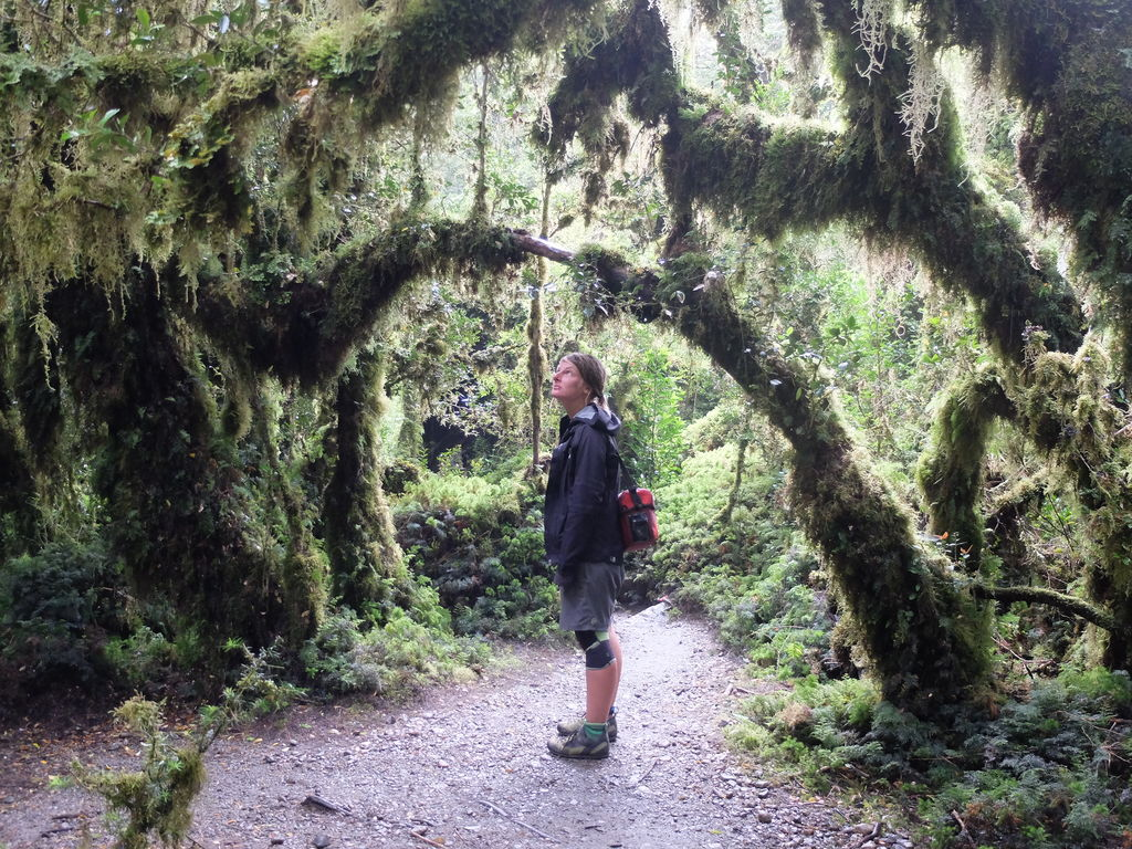 """""""Verwunschener Wald"""", mit verzauberter Biologin"""